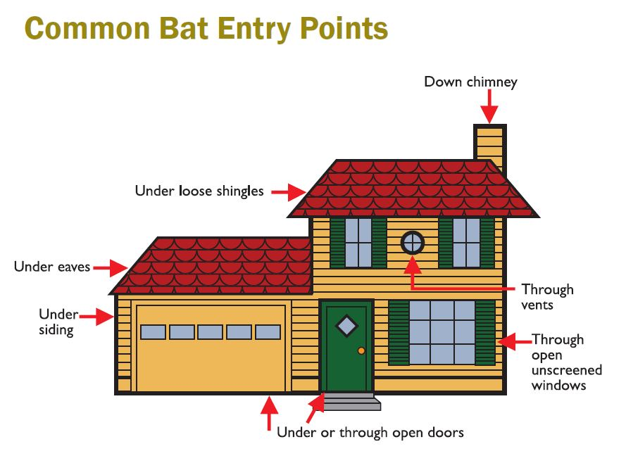 common-bat-entry-points Trapper Jack Knoxville TN